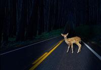Fall Roadway Hazards Include Deer